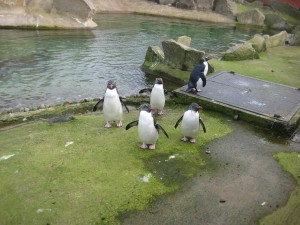 Work trip to zoo - Penguins!